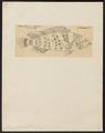 Mesoprion malabaricus - - Print - Iconographia Zoologica - Special Collections University of Amsterdam - UBA01 IZ12900177.tif