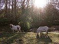 Miniature ponies grazing at Wittensford, New Forest - geograph.org.uk - 92940.jpg