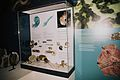 Mollusca2BelfastMuseum.jpg