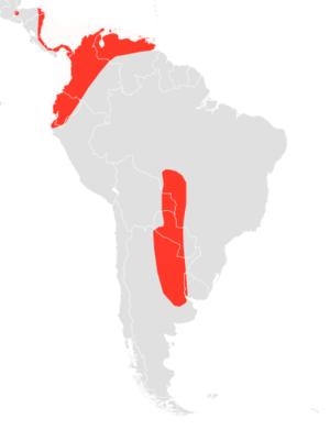 Bonda mastiff bat - Image: Molossus currentium map