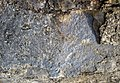 Molybdenite vein in alkaline igneous host rock (Oligocene, 24-33 Ma; Climax Mine, Fremont Pass, Colorado, USA) 2 (19870159212).jpg