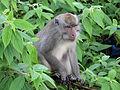 Monkey-IMG 4604.JPG