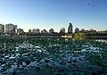 Morning at the Lotus Pond (20170524053512).jpg