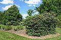 Mount Airy Arboretum - DSC03819.JPG