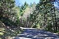 Mt. Walker Viewpoint Rd 01.jpg