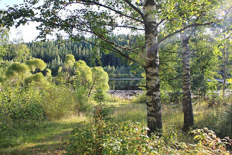 File:Muuratjärvi Lake and Forest, Finland, August 2013.JPG