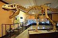 Muzeum Ewolucji PAN 01.JPG