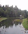 Mynagappally Kallukadavu river.jpg