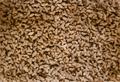 NIND kibbles ISO200-2.png
