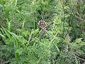 Namibia-Spider.JPG