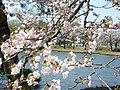 Nanko Park - panoramio.jpg