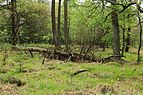 Nationaal Park Drents-Friese Wold 03.JPG