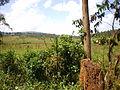Nature In Kayanza.JPG