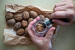 Nutcracker - Screw nutcracker with walnuts