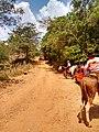 Nova América - State of Goiás, Brazil - panoramio.jpg