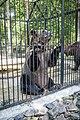 Novosibirsk Zoo - panoramio (4).jpg