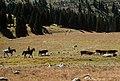 Okanogan Wenatchee National Forest, Horseshoe Basin, Pasayten Wilderness (36296952596).jpg