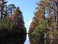 Okefenokee Swamp Folkston GA Entry - panoramio - pseabolt.jpg