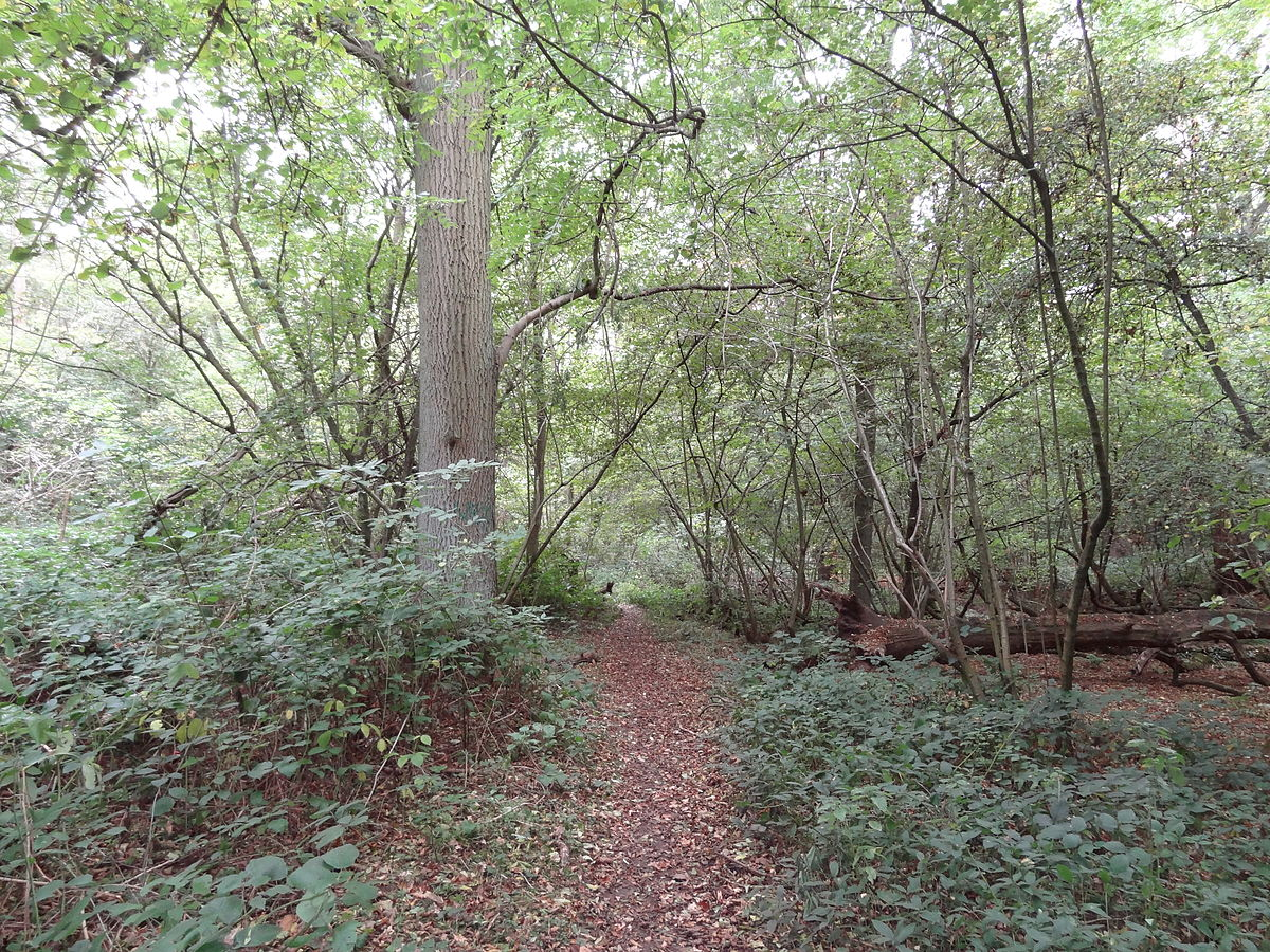Old Park Wood Wikipedia