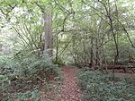 Old Park Wood path.jpg