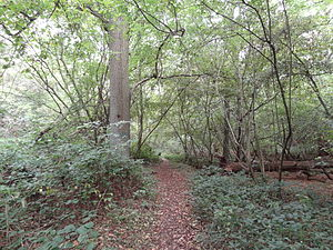 Old Park Wood - Image: Old Park Wood path
