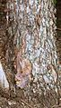 Old river birch trunk.jpg