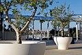 Olives - panoramio (1).jpg