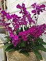 Orchid-5.jpg