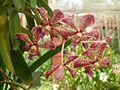 Orquidea8.jpg