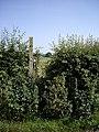 Overgrown Stile - geograph.org.uk - 461125.jpg