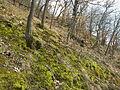 PR Břenčák 3630.jpg