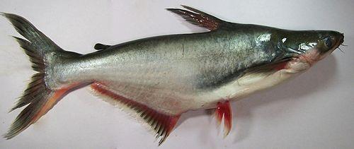 Aasian kala dating