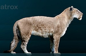 American lion - Reconstruction of an American lion