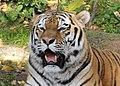 Panthera tigris (6337100677).jpg