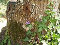 Papillon sur l'arbre.jpg