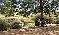 Parada para comer en el Manzanares (ruta Daganzo-Narros) - panoramio.jpg