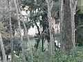 Parc del Laberint P1080883.JPG