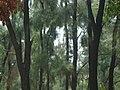 Park around Sheesh Mahal, Shalimar Bagh, Delhi 05.jpg