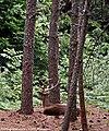 Parque Biológico de Vinhais - Portugal (32319988760).jpg