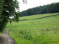 Pastures and Whitehill Plantation near Newbiggin (2) - geograph.org.uk - 512975.jpg