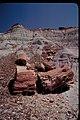 Petrified Wood at Petrified Forest National Park, Arizona (9f69e0b3-3543-4056-bf78-197516f8af45).jpg