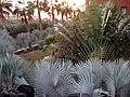 Pflanzen im Teneguia Princes - panoramio.jpg