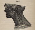 Physiology for Young People - 1884 - Nerves of the face and neck.png