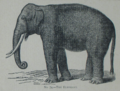 Picture Natural History - No 74 - The Elephant.png