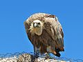 PikiWiki Israel 38864 Wildlife and Plants of Israel.JPG