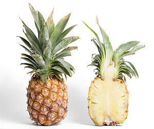 Compound fruit - A pineapple is a multiple fruit.