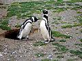Pinguinos - Flickr - Breathe .-.jpg