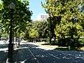 Pinus roxburghii de la Diagonal P1260801.jpg