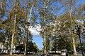 Plane tree Garden.jpg