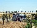 Planter du desert - panoramio (1).jpg